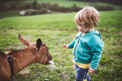 Junge füttert eine Geiss